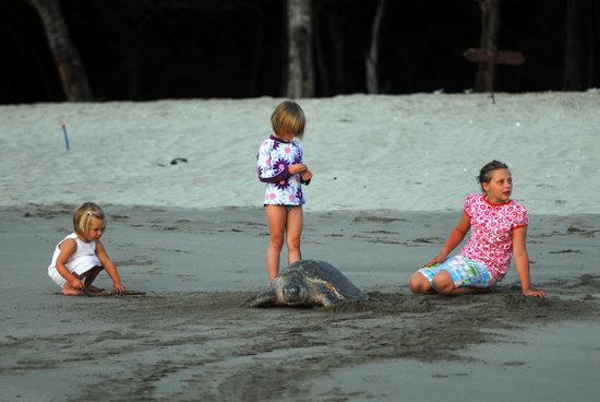 Playa El Coco, Nicaragua: Turtles Activities