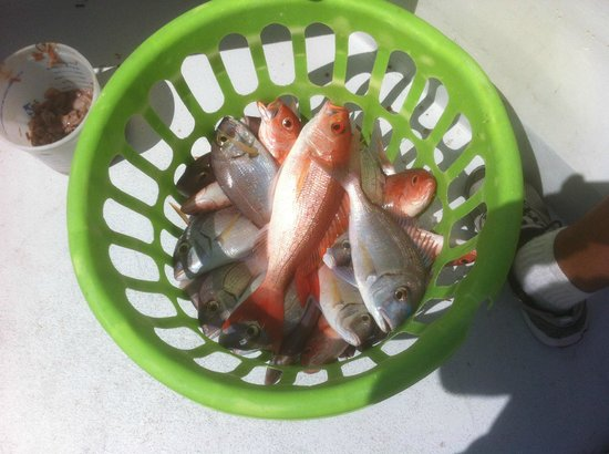 Destin Princess Party Boat: Our Catch...34 fish we can eat