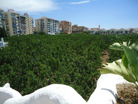 Hotel Suite Albayzin del Mar: Vistas al campo de arboles frutales que rodea al hotel