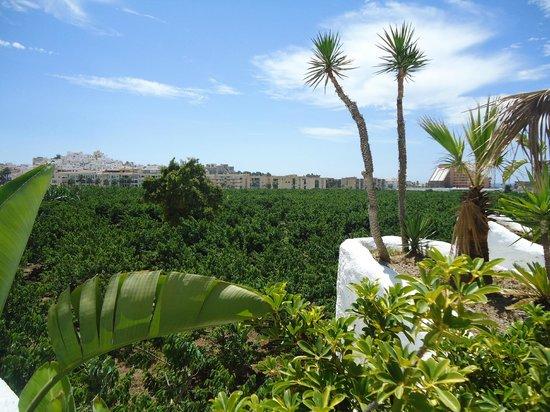 Hotel Suite Albayzin del Mar: Mas vistas del hotel al campo de arboles frutales que lo rodea