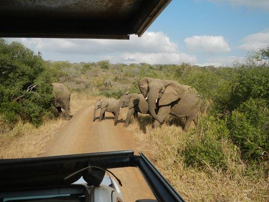 Extreme Nature Tours and Travel Day Tours: Herd of 30+ Elephants in Hluhluwe-iMfolozi