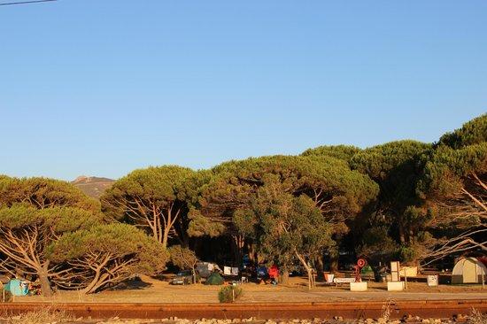 Camping de la Plage : pineta