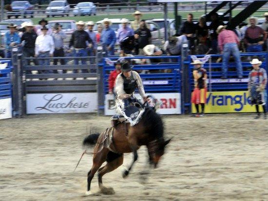 Jackson Hole Rodeo: Bronco riding