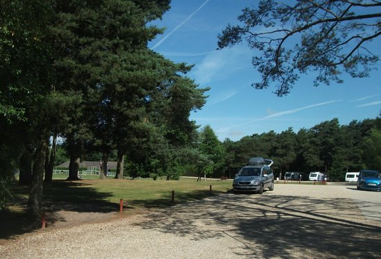 Wareham Forest Tourist Park: space to play games