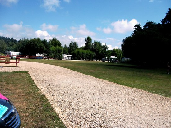 Wareham Forest Tourist Park: woodland camping area