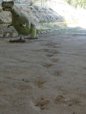 The Heritage Museum of the Texas Hill Country: dino tracks