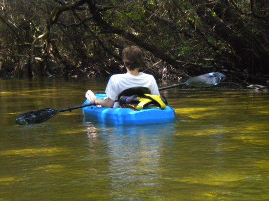 Turkey Creek Nature Trail: Kayaking on Turkey Creek