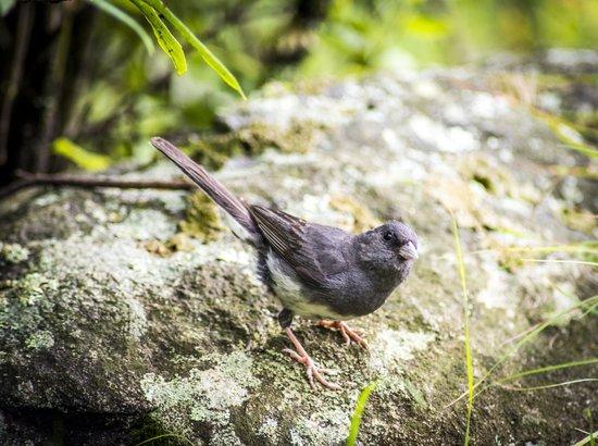 Len Foote Hike Inn: birds