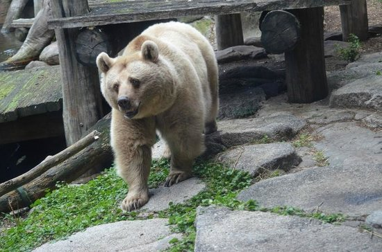 Melbourne Zoo: Honey the Syrian brown bear