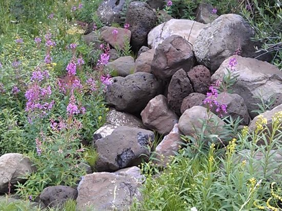 Grand Junction, CO: wildflowers near the creek