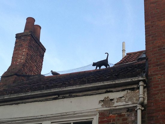 York Cat Trail: One of the cats you'll spot on the Kitten Trail