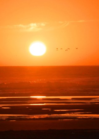 The Anchorage Cottages : Birds at sunset