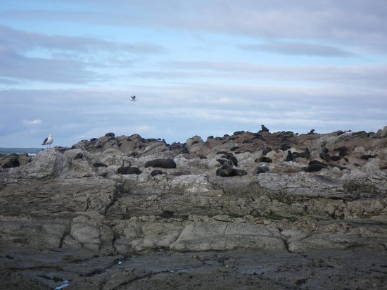 Kaikoura Kayaks: The Male Seal Colony