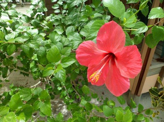 Lost Paradise Inn: Flowers