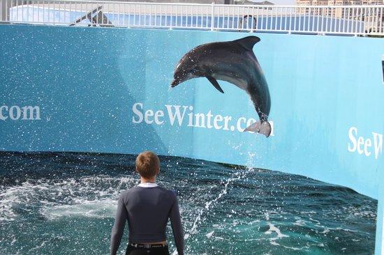 Clearwater marine aquarium discount coupons