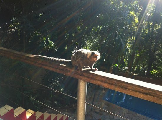 Gavea Tropical Boutique Hotel: Monkeys come down for breakfast too