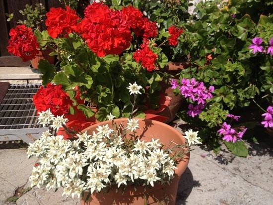Agritur Malga Mortigola: colori
