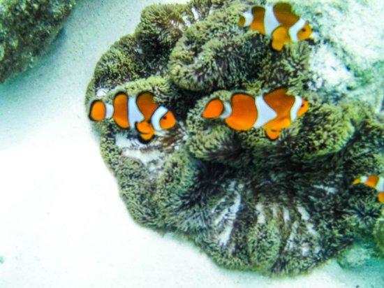 Coral Garden: photo by jevee_paulo02@yahoo.com
