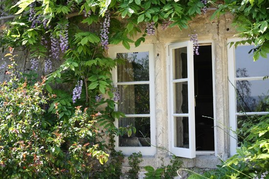 Wisteria over the window of Leigh House
