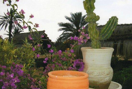 Caribbean World Palma Djerba: magnifique décor