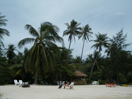 My Phangan Resort: palm trees
