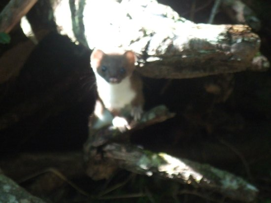 Kai Komagatake : 登山道にいた小動物