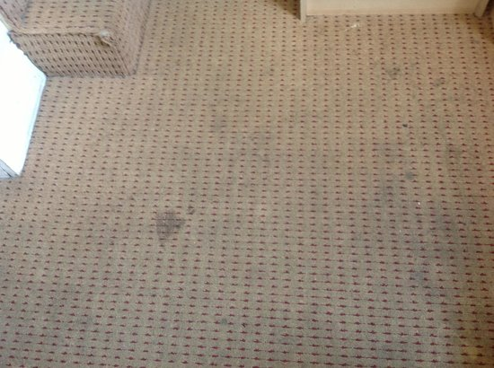 Dylan Apartments Earls Court: Not like the web pics, disgusting carpet in our room