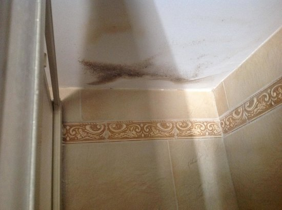 Dylan Apartments Earls Court : Mouldy ceiling, in very small toilet space