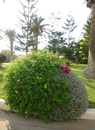 Creta Star Hotel : Un jardin magnifique et bien entretenu