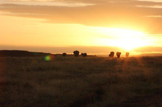 Rekero Camp, Asilia Africa: Elephant sundowner!