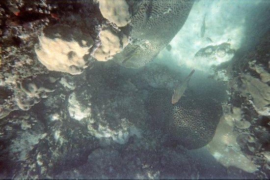 Seamonkey's Scuba Diving: Coral