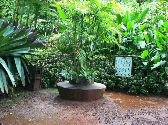 Peace Lodge: Hummingbird Garden