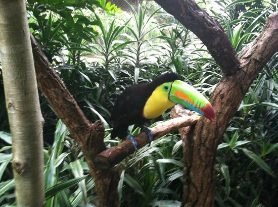 Peace Lodge: Toucan in the Aviary