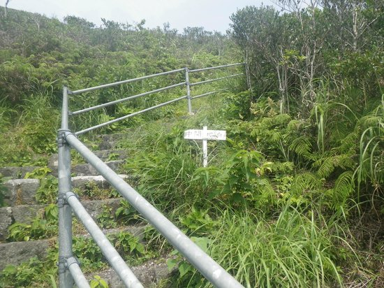 Mt.Nishiyama: 登山道 階段
