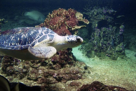 Tartaruga foto di acquario di genova genova tripadvisor for Tartaruga da acquario