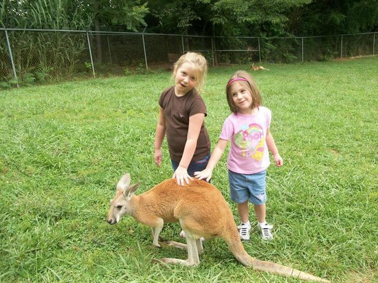 Kentucky Down Under Adventure Zoo: We got to pet the kangaroos!