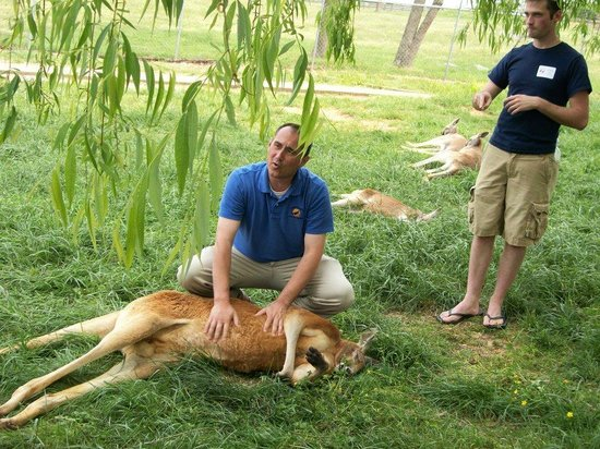 Kentucky Down Under Adventure Zoo: Kangaroo Walk-about program