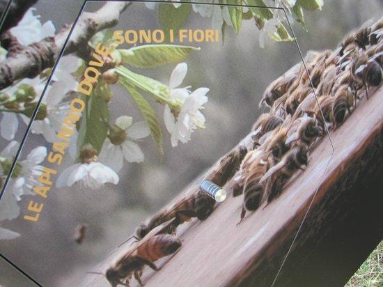 Parco delle api e del miele