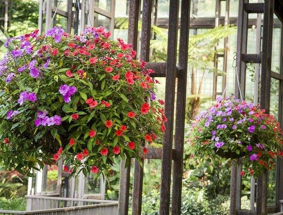Callaway Gardens Zip Line