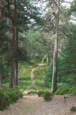 Anagach Woods : the path