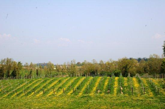 Bio Agriturismo Vojon: vigne