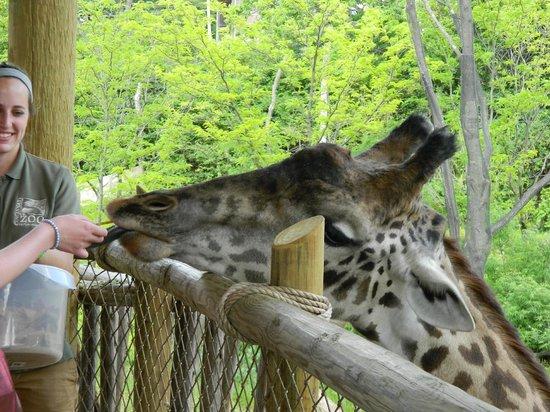 Grumpy Orangatan Picture Of Cincinnati Zoo Botanical Garden Cincinnati Tripadvisor