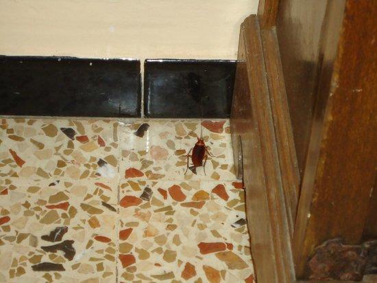 Hotel Talamanca : Cockroach