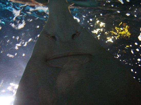 Baby Shark Picture Of Ripley 39 S Aquarium Of The Smokies