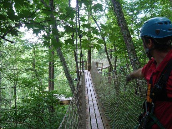 Pigeon River Canopy Tours : Bridge to Zipline