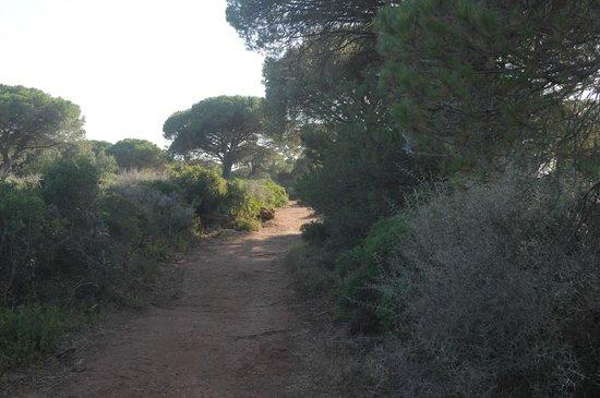 Camping El Faro : camino para llegar a la playa.