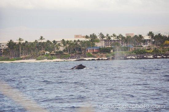 Ocean Sports Whale Watch Adventure: Whale