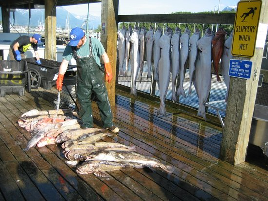 Alaskan Adventures Unlimited: All 6 limited out! Halibut, rockfish and lingcod