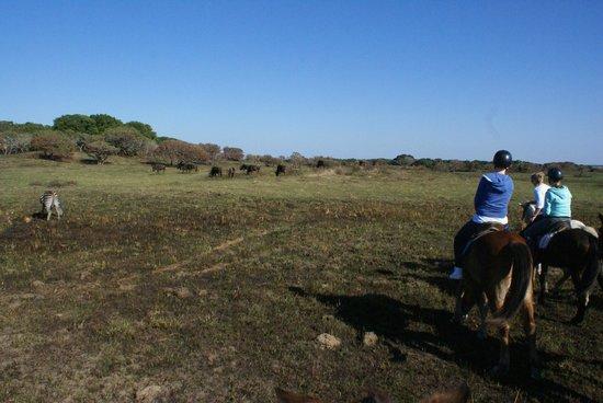 Bhangazi Horse Safaris: Wildlife views a plenty on the bush ride in iSimangaliso Wetland Park.