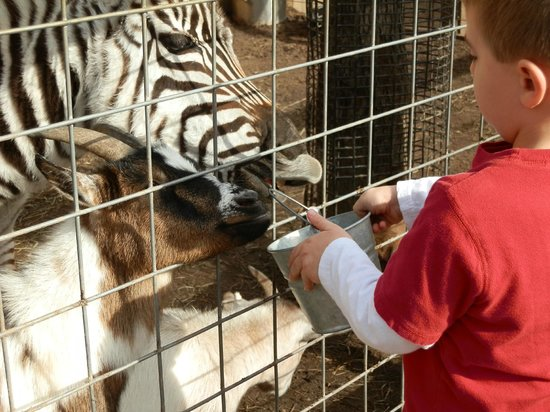 Living Treasures Wild Animal Park New Castle 2018 Reviews All You Need To Know Before Go With Photos Tripadvisor